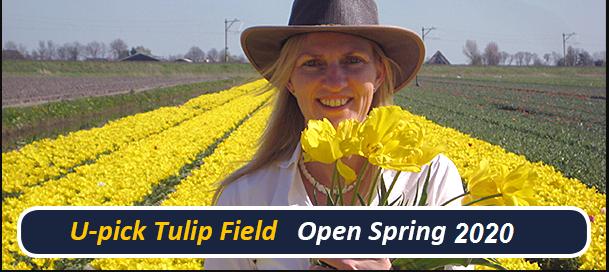 open spring 2020
